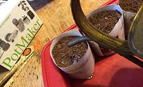 Watering seeded pots.