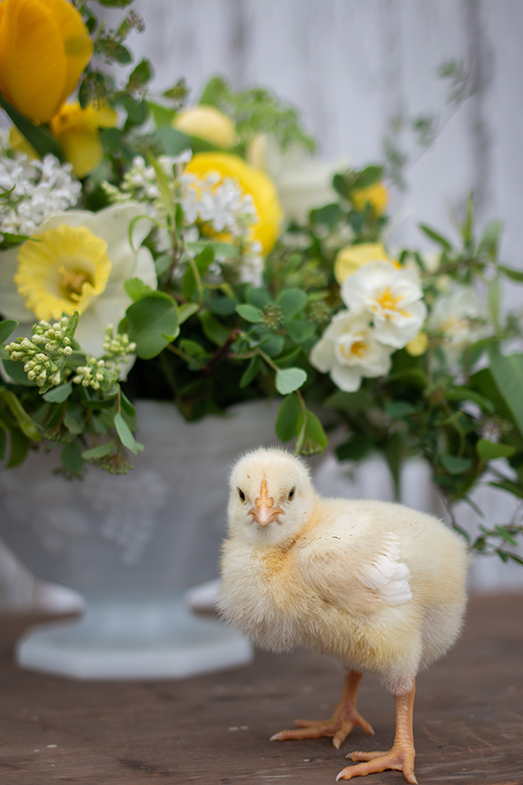 baby chick with flowers
